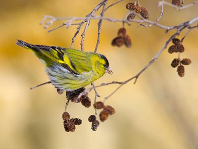 Птички (4)
